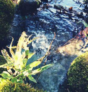 足柄山の湧水