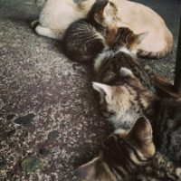 筋肉の連携ならぬ猫の連携