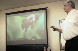 航空力学で説明できないクマバチの飛び方