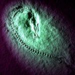 sebone化石