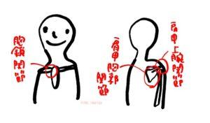 胸鎖関節肩関節