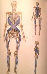 筋膜スパイラルライン