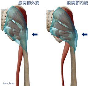 股関節の内旋・外旋で四角いおしりが